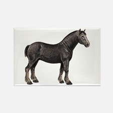 Percheron Horse Rectangle Magnet