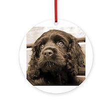 Spaniel Puppy Ornament