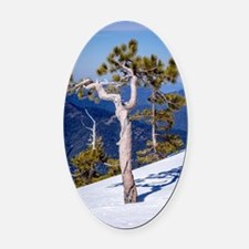 Cute The summit Oval Car Magnet