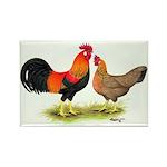 Leghorns Rooster & Hen Rectangle Magnet (100 pack)