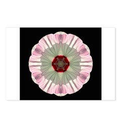 Hibiscus Moscheutos I Postcards (Package of 8)