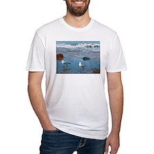 Gulls in Blue Shirt