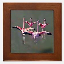 Flamingos on Framed Tile