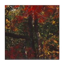 Foliage 15