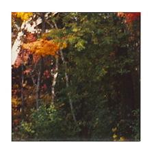 Foliage 12