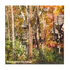 Foliage 11