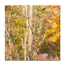 Foliage 6