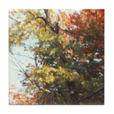 Foliage 2