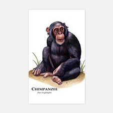 Chimpanzee Rectangle Decal