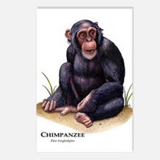 Chimpanzee Postcards (Package of 8)