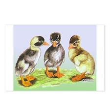 Runner Duck Ducklings Postcards (Package of 8)