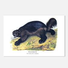 Audubon Wolverine Animal Postcards (Package of 8)
