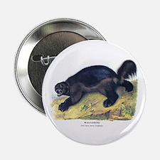 "Audubon Wolverine Animal 2.25"" Button (10 pack)"