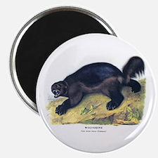 "Audubon Wolverine Animal 2.25"" Magnet (10 pack)"