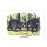 Audubon Black Bear Animal Postcards (Package of 8)