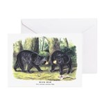 Audubon Black Bear Animal Greeting Cards (Pk of 10