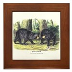 Audubon Black Bear Animal Framed Tile