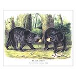 Audubon Black Bear Animal Small Poster