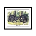 Audubon Black Bear Animal Framed Panel Print