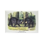 Audubon Black Bear Animal Rectangle Magnet (10 pac