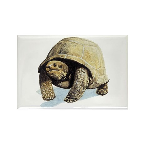 Galapagos Tortoise Rectangle Magnet (10 pack)