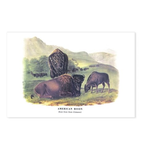 Audubon American Bison Buffalo Postcards (Package