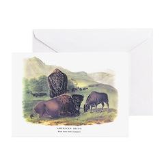 Audubon American Bison Buffalo Greeting Cards (Pk