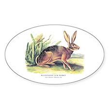 Audubon Jack Rabbit Animal Oval Decal