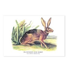 Audubon Jack Rabbit Animal Postcards (Package of 8