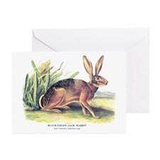 Audubon Jack Rabbit Animal Greeting Cards (Pk of 1