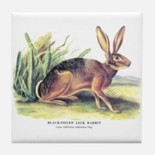 Audubon Jack Rabbit Animal Tile Coaster