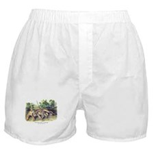 Audubon Cougar Cat Animal Boxer Shorts