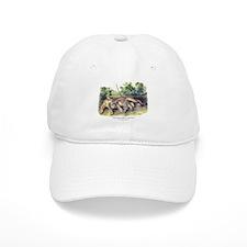Audubon Cougar Cat Animal Baseball Cap