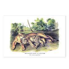 Audubon Cougar Cat Animal Postcards (Package of 8)