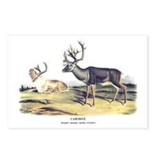 Audubon Caribou Reindeer Animal Postcards (Package