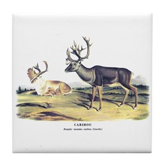 Audubon Caribou Reindeer Animal Tile Coaster