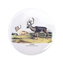 Audubon Caribou Reindeer Animal 3.5