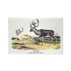 Audubon Caribou Reindeer Animal Rectangle Magnet (