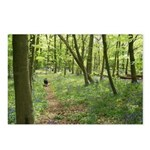Dogs in Woodland Postcards (Package of 8)