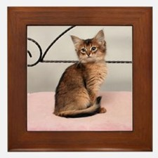 Ruddy Somali kitten Framed Tile