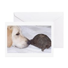 Dog Meets Tortoise Greeting Cards (Pk of 10)