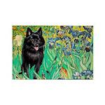Irises / Schipperke #2 Rectangle Magnet (10 pack)
