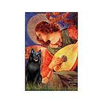 Mandolin / Schipperke #5 Rectangle Magnet (100 pac