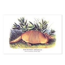 Audubon Armadillo Animal Postcards (Package of 8)