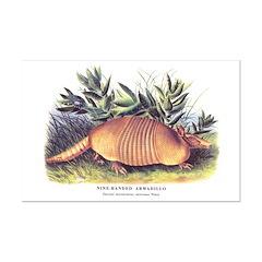 Audubon Armadillo Animal Posters