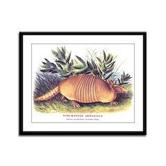 Audubon Armadillo Animal Framed Panel Print