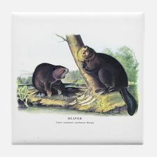 Audubon Beaver Animal Tile Coaster