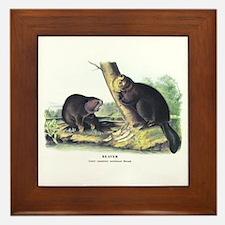 Audubon Beaver Animal Framed Tile