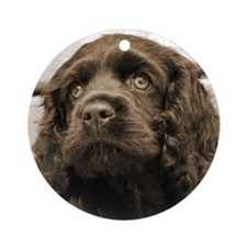 Spaniel Puppy Ornament
