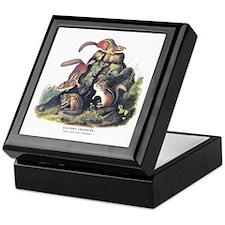 Audubon Chipmunk Animal Keepsake Box
